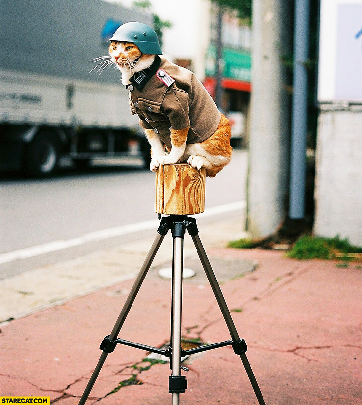 Speed camera cat