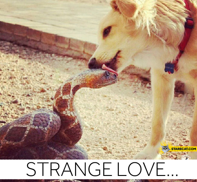 Strange love dog snake