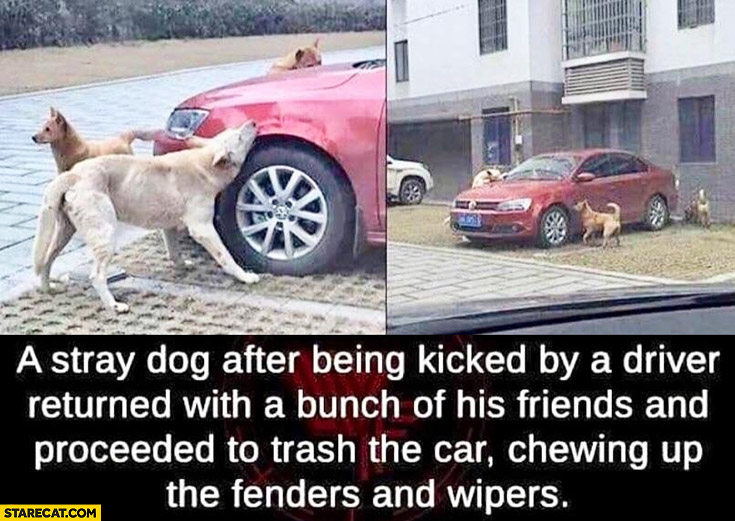 Stray dog after being kicked by a driver returned to trash his car