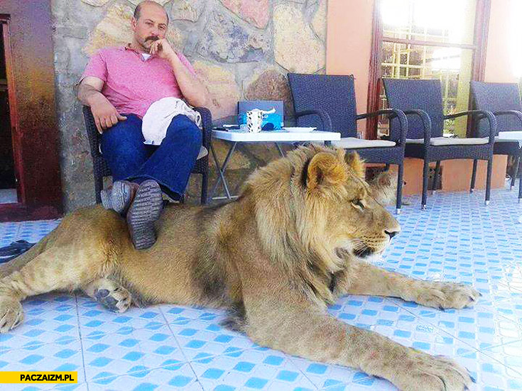 Stylish footrest lion