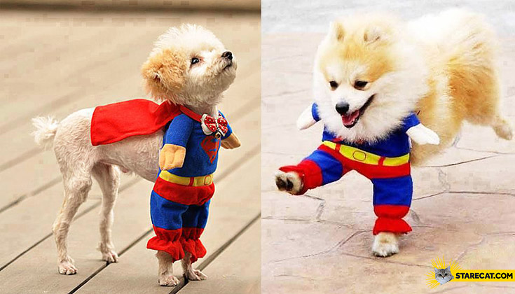Superman hero dog outfit costume