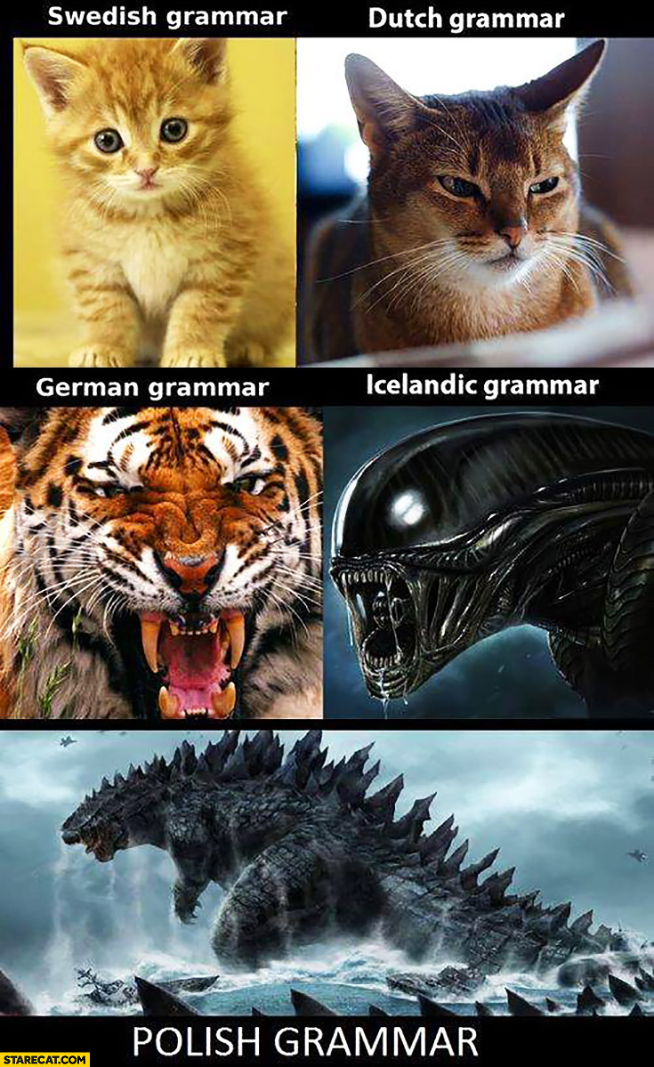 Swedish grammar vs Dutch grammar vs German grammar vs Icelandic grammar vs Polish grammar monsters comparison