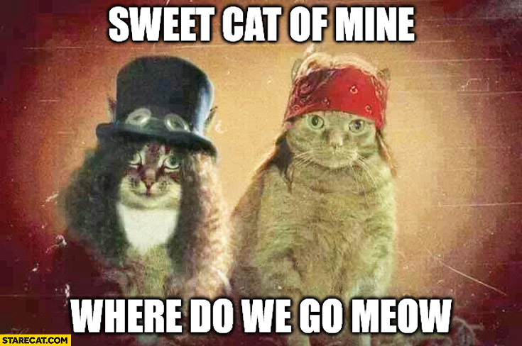 Sweet cat of mine where do we go meow Axl Rose