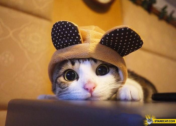 sweet-kitty.jpg
