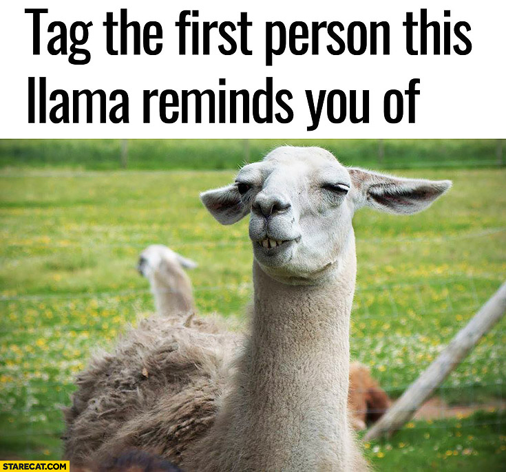 Tag the first person this llama reminds you of