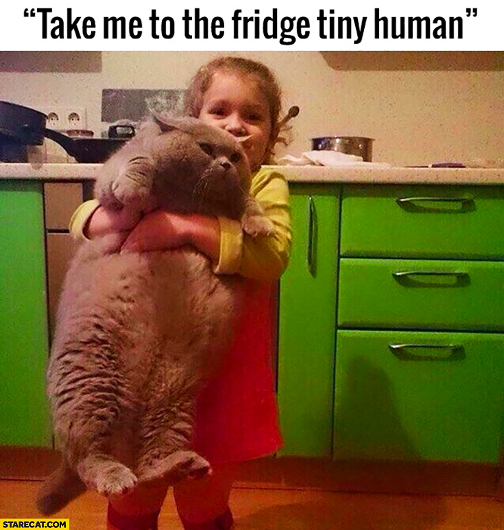 Take me to the fridge tiny human huge fat cat