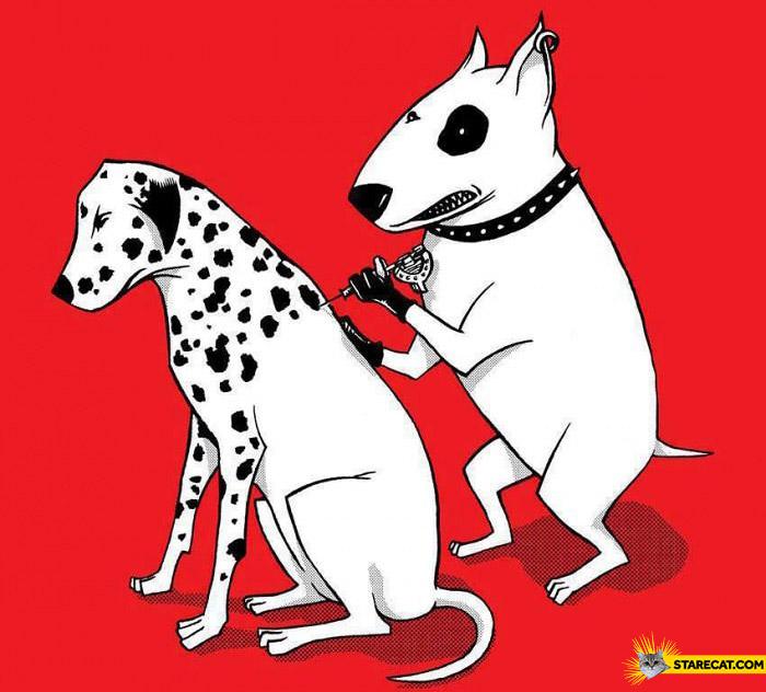 Tattooing dalmatian