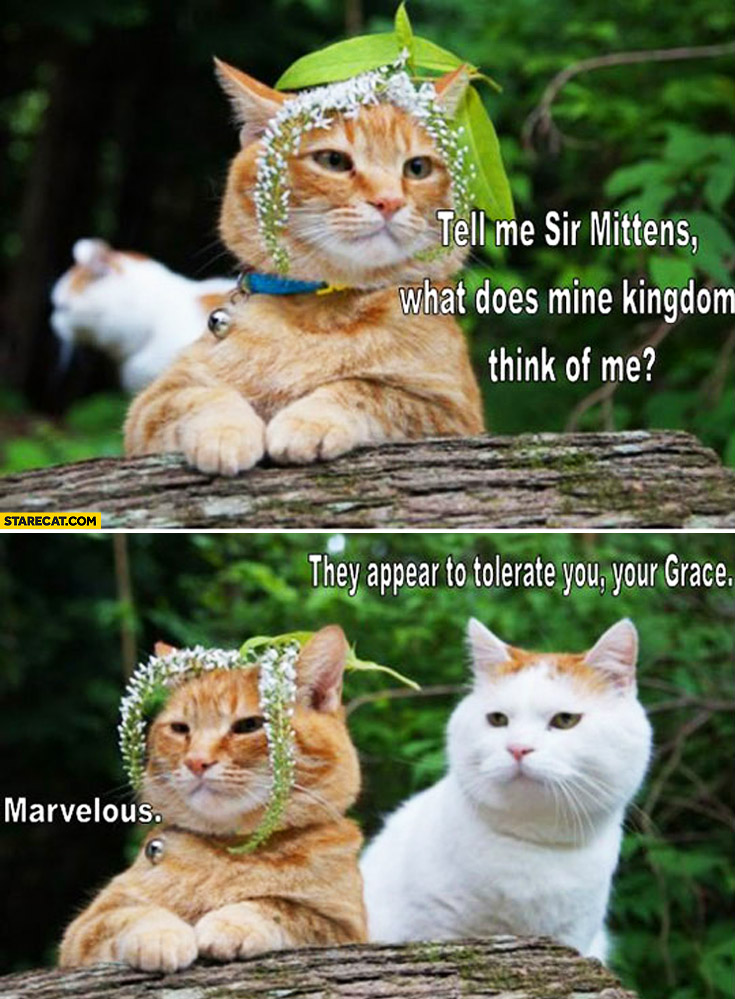 Tell me Sir Mittens what does mine kingdom think of me? They appear to tolerate you your grace marvelous