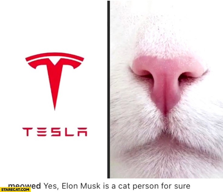 Tesla logo like cat nose Elon Musk is a cat person for sure