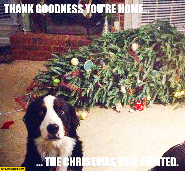 Thank goodness you're home the Christmas tree fainted