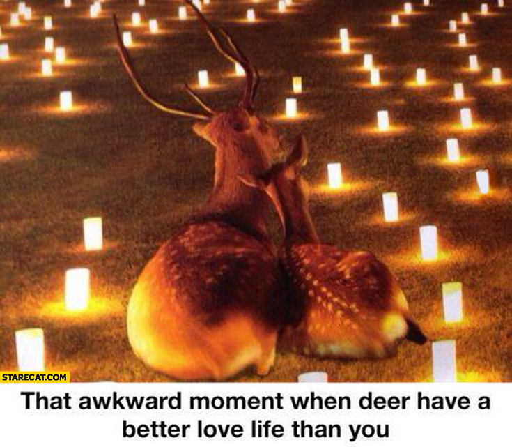 That ankward moment when deer have a better love life than you