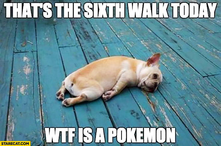 That's the sixth walk today wtf is a Pokemon? tired dog