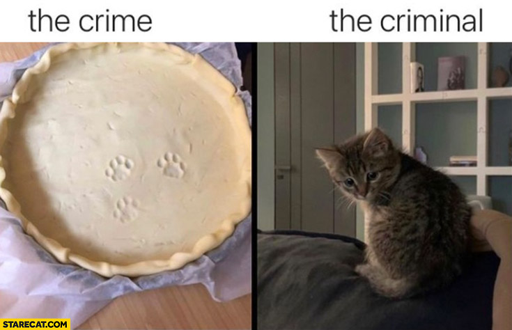 The crime vs the criminal cat paws on a cake