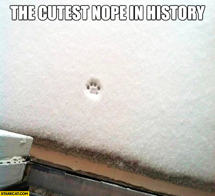 The cuttest nope in history – cat refuses to go outside snow