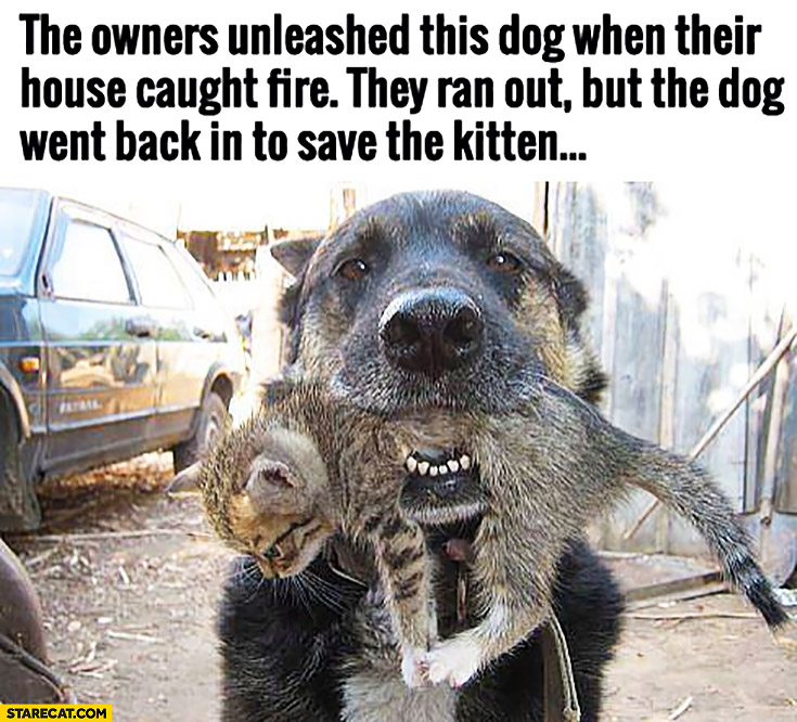 The owners unleashed this dog when their house caught fire then ran out but the dog went back in to save the kitten