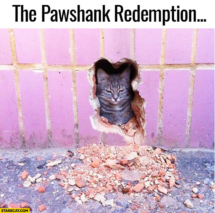 The Pashank Redemption cat destroyed wall
