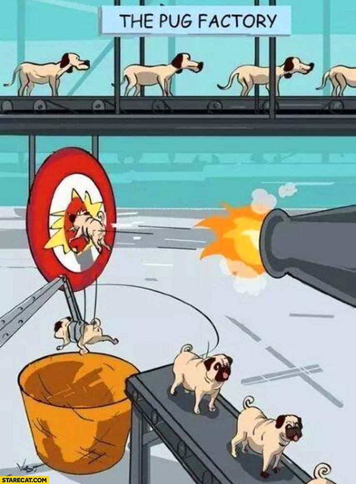 The pug factory dog breed explained shooting at target
