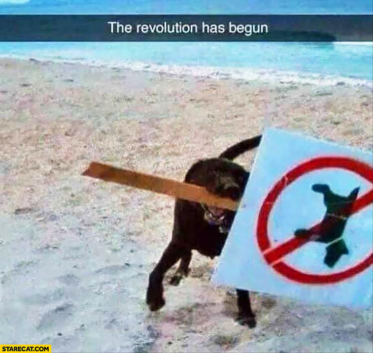 The revolution has begun, dog carrying a no dogs sign