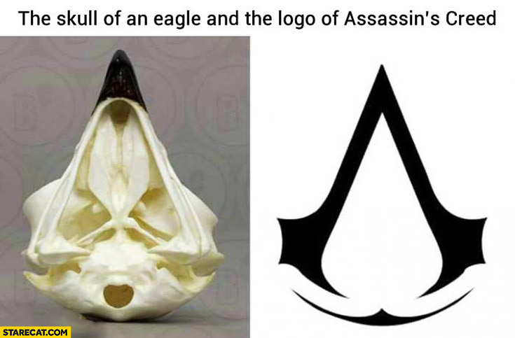 The skull of an eagle logo of Assassins Creed comparison