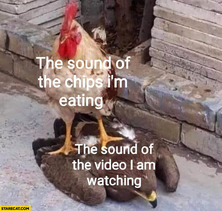 The sound of the chips I'm eating vs the sound of the video I am watching hen chicken on a bird