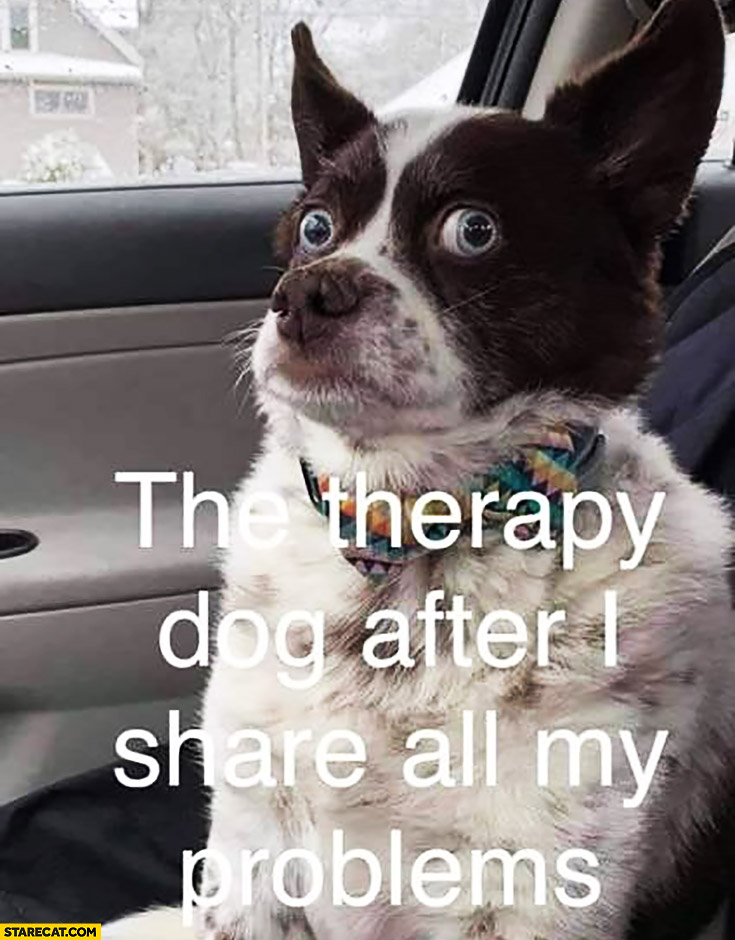 The therapy dog after I share all my problems confused terrified