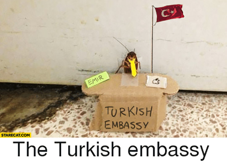 The Turkish embassy emir cockroach