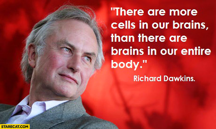 There are more cells in our brains than there are brains in our entire body