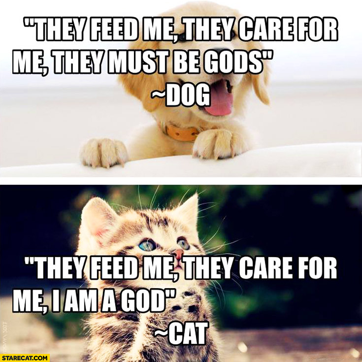 They feed me they care for me they must be gods – dog. I am a god – cat