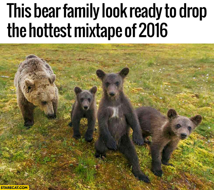 This bear family look ready to drop the hottest mixtape of 2016
