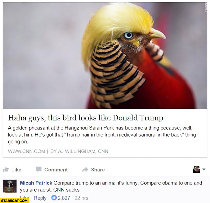 This bird looks like Donald Trump. Compare Trump to an animal it's funny, compare Obama to one and you are racist. CNN sucks