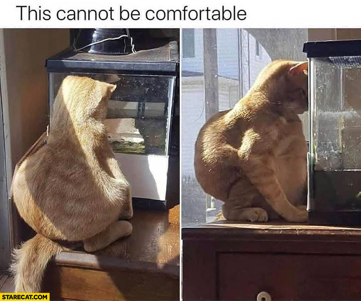 This cannot be comfortable cat weird sitting