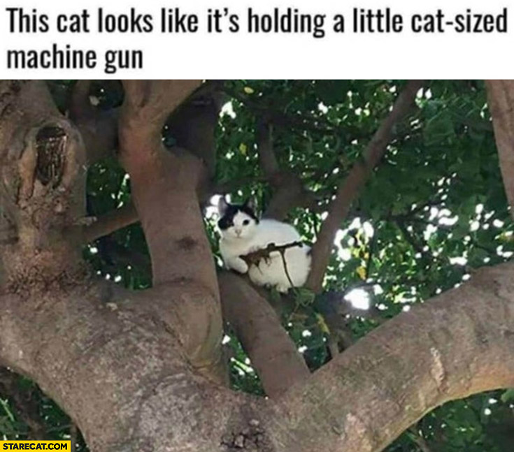 This cat looks like its holding a little cat sized machine gun