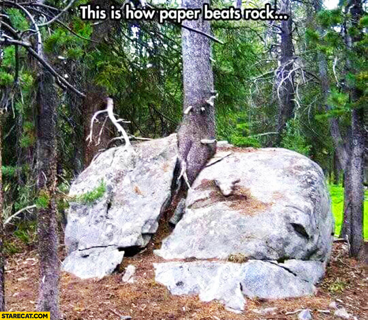 This is how paper beats rock – tree growing in the middle of the rock