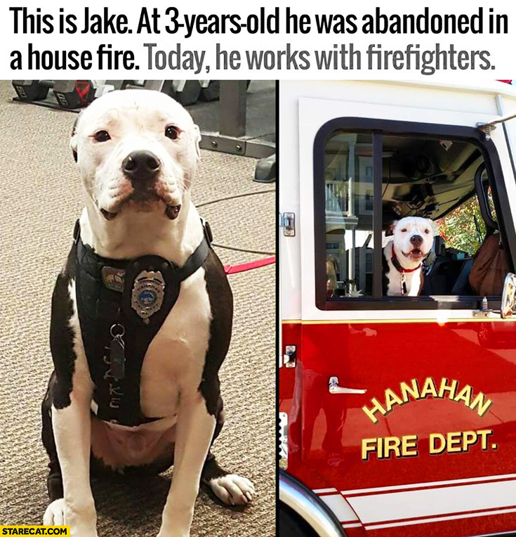 This is Jake 3 years old dog abandoned in house fire today works with firefighters