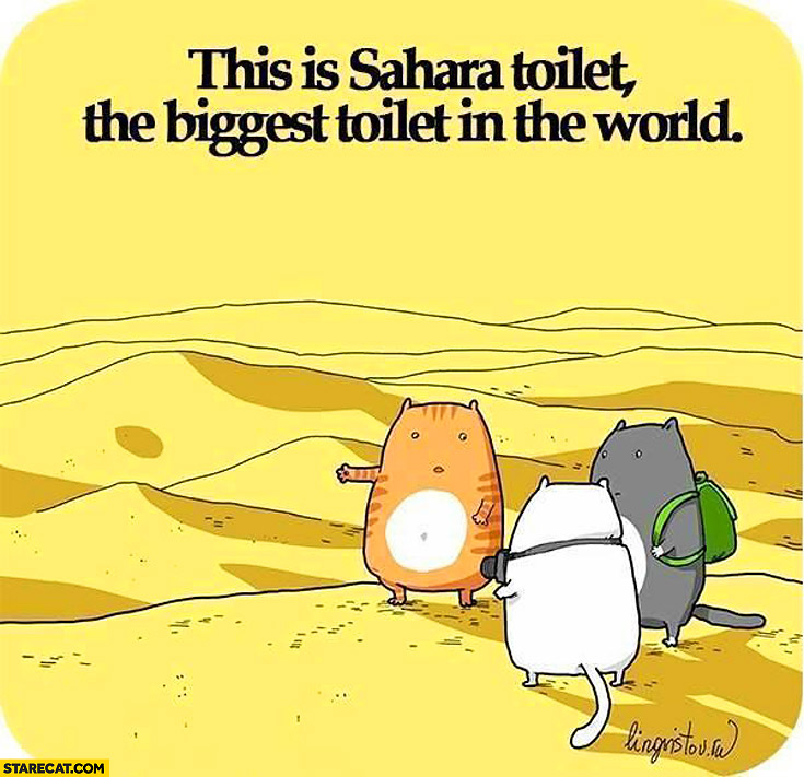 This is Sahara toilet the biggest toilet in the world