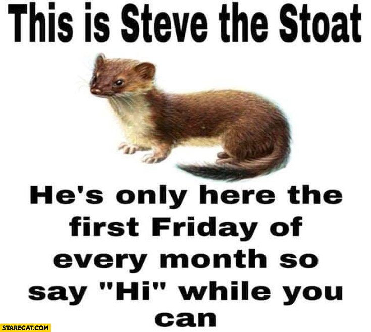 This is Steve the stoat, he's only here the first Friday of every month so say hi while you can