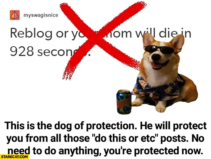 """This is the dog of protection, he will protect you from all those """"do this or etc."""" posts, no need to do anything you're protected now"""