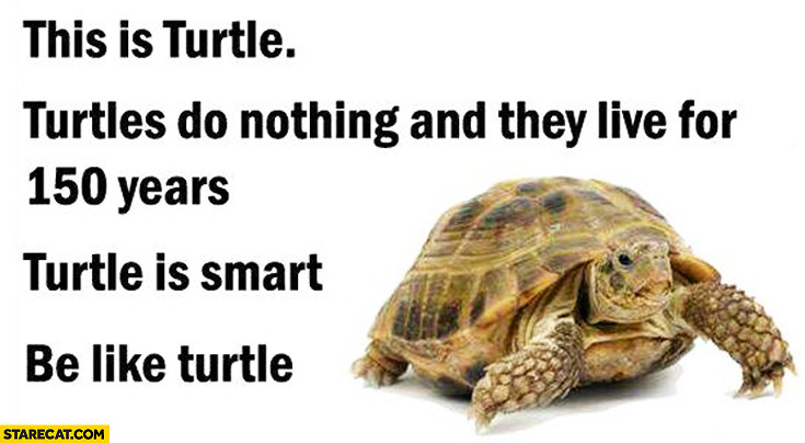 This is turtle, they do nothing and live for 150 years. Turtle is smart, be like turtle