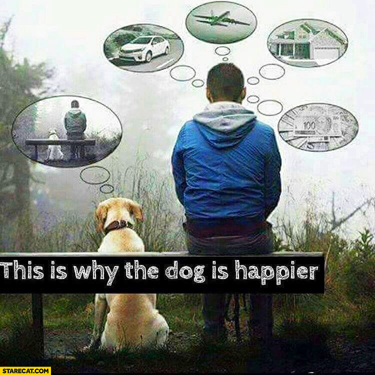 This is why the dog is happier, not thinking about money, house, cars