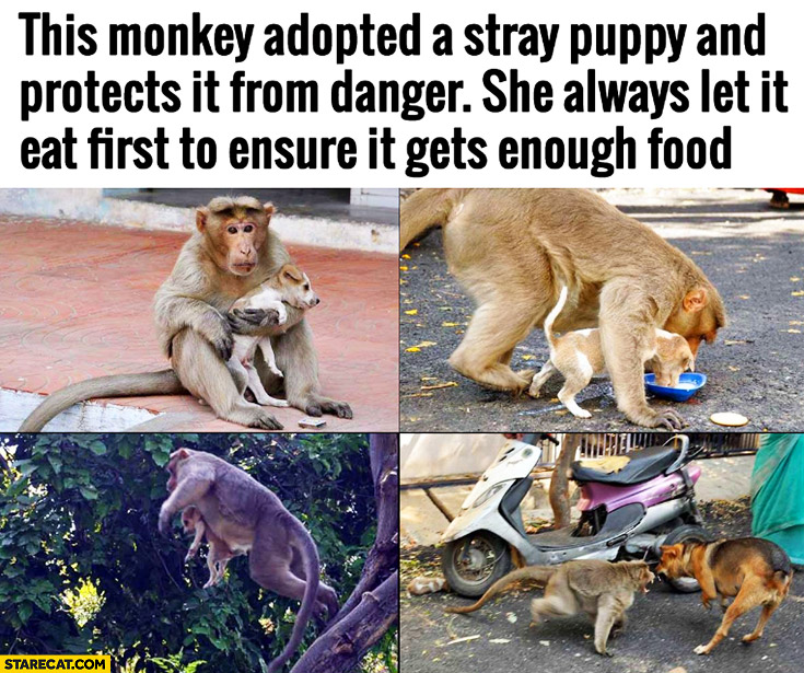 This monkey adopted a stray puppy and protects it from danger. She always let it eat first to ensure it gets enough food