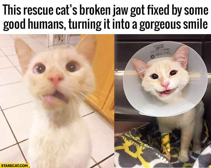This restue cat's broken jaw got fixed by some good humans turning it into a gorgeous smile cute