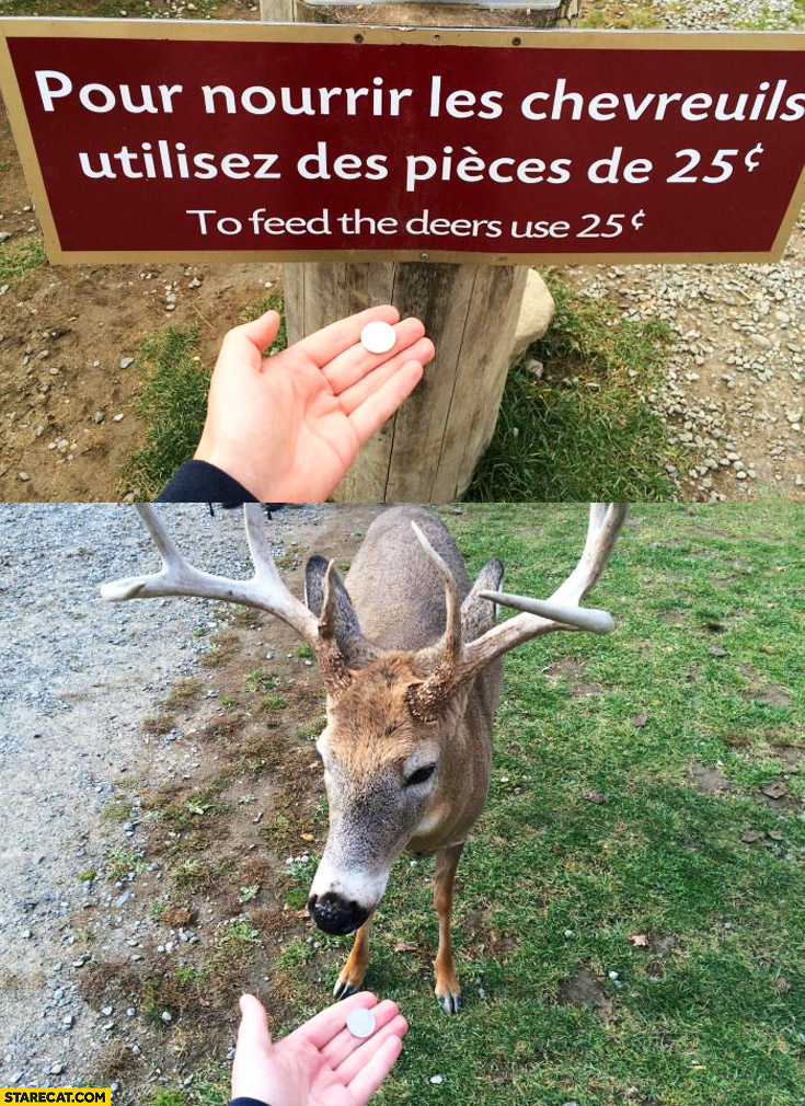 To feed deers use the 25 cents coin