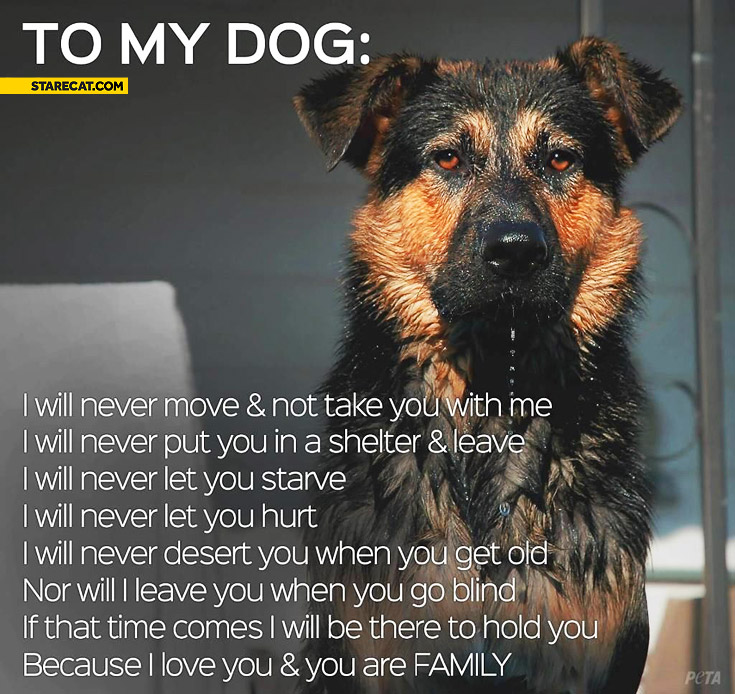 To my dog I will never because I love you and you are family