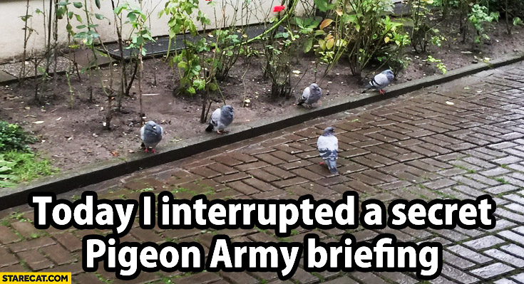 Today I interrupted a secret pigeon army briefing