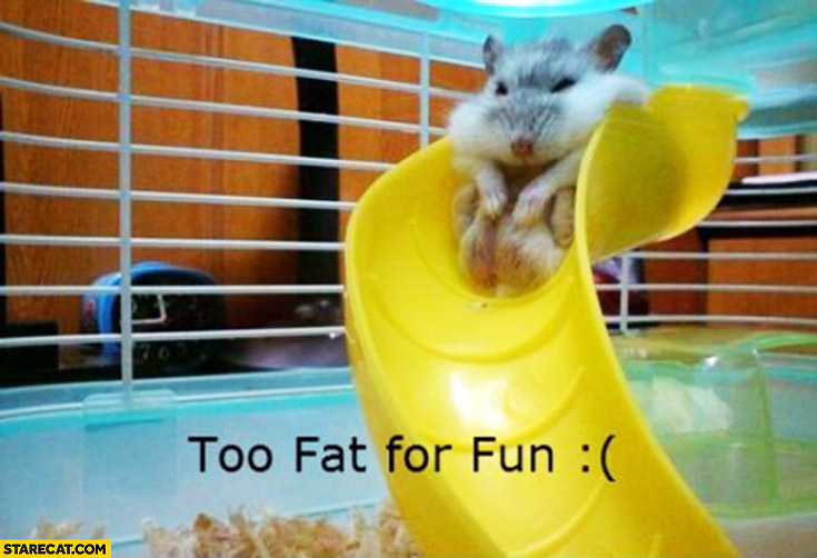 Too fat for fun hamster on a slide