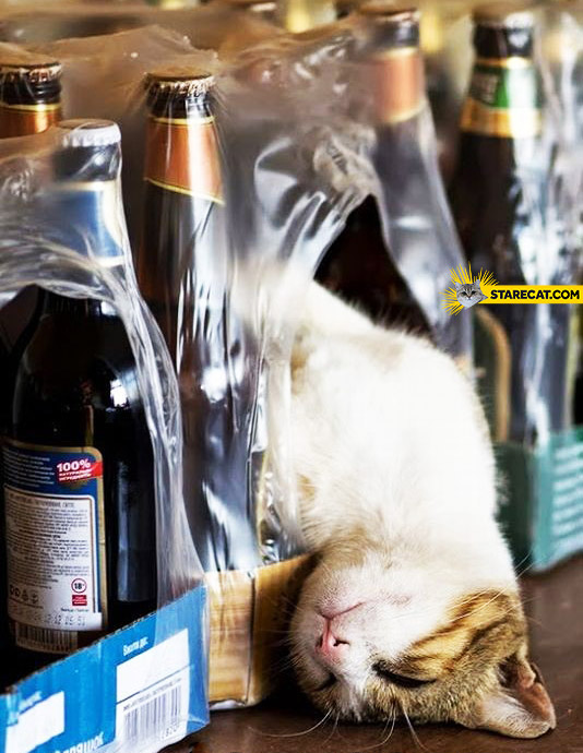 Too much beer cat