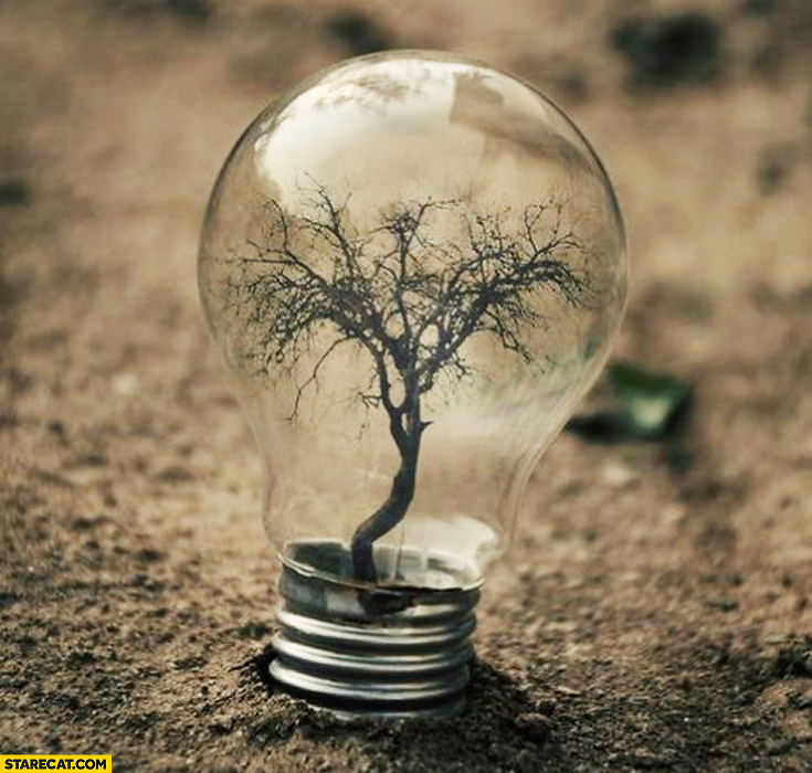 Tree In A Light Bulb Starecat Com