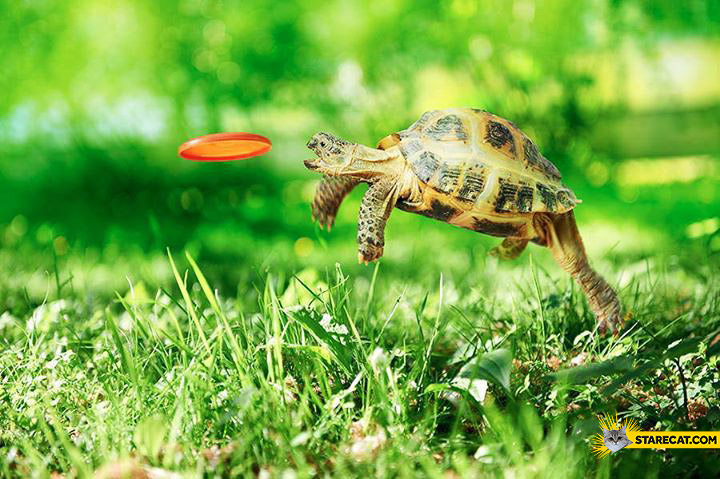 Turtle jumping to catch frisbee