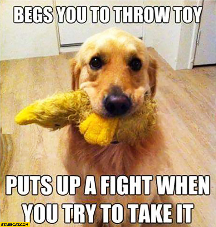 Typical dog begs you to throw toy, puts up a fight when you try to take it
