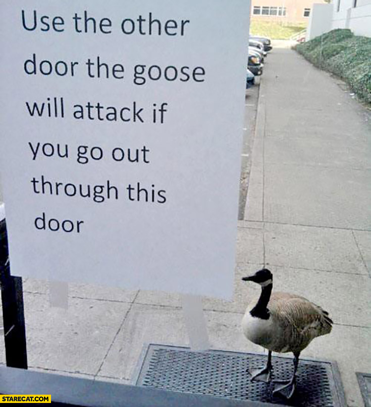 Use the other door the goose will attack if you go out through this door